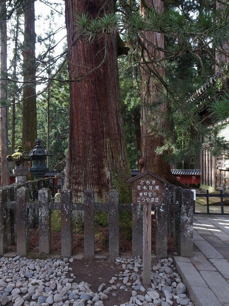 日光東照宮まきの木